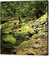Moss By The Stream Canvas Print
