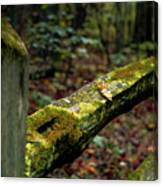 Moss Covered Fence Canvas Print