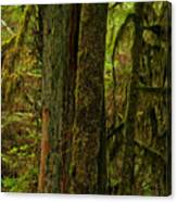 Moss Covered Giant Canvas Print