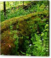 Moss Covered Log 2 Canvas Print