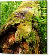 Moss Covered Log 3 Canvas Print