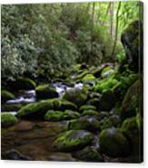 Moss Covered River Rocks Canvas Print