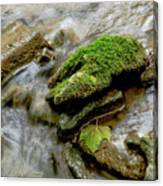 Moss Covered Rock Canvas Print