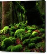 Moss Covered Rocks And Tree Yosemite Np California Canvas Print