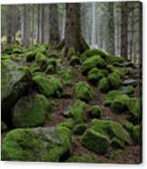 Moss Covered Rocks Canvas Print