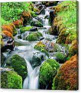 Moss Covered Stream Canvas Print