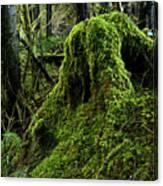 Moss Covered Tree Stump Canvas Print