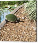 Moss Covered Turtle Canvas Print