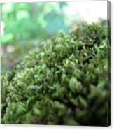 Moss I Canvas Print