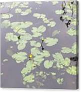 Moss Lake Canvas Print