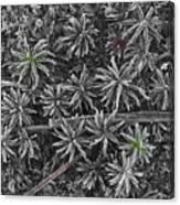 Moss Near Mirror Lake Canvas Print