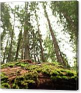 Moss On A Log Under The Cedars Canvas Print
