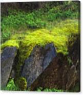 Moss On Rocks Canvas Print