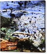 Moss On Wood Canvas Print