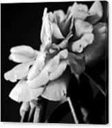Moss Rose I Canvas Print