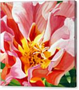 Moss Rose Canvas Print