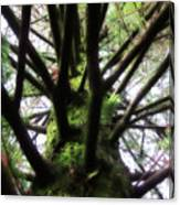 Moss Tree Canvas Print