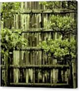 Mossy Bamboo Fence - Digital Art Canvas Print