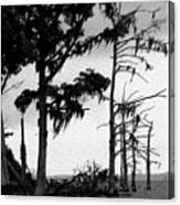 Mossy Beach Trees Canvas Print