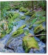 Mossy Blue Brook Canvas Print