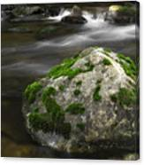 Mossy Boulder In Mountain Stream Canvas Print