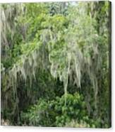 Mossy Branches Canvas Print