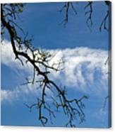 Mossy Branches Skyscape Canvas Print