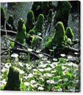 Mossy Congregation II Canvas Print