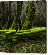 Mossy Fence 3 Canvas Print