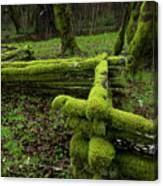 Mossy Fence 4 Canvas Print