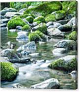 Mossy Forest Stream Canvas Print