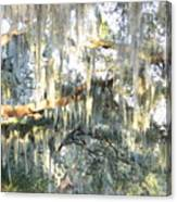 Mossy Live Oak Canvas Print