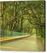 Mossy Oaks Canopy In South Carolina Canvas Print