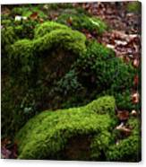 Mossy Rocks In Spring Woods Canvas Print