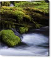 Mossy Rocks Oregon 3 Canvas Print