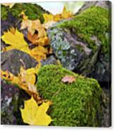 Mossy Stones And Maple Leaves Canvas Print