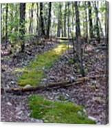 Mossy Trail Canvas Print