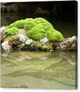 Mossy Turtle Rock Canvas Print
