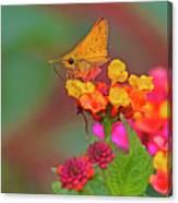 Moth #2 Canvas Print