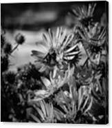 Moth And Flowers Canvas Print