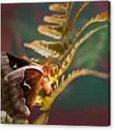 Moth At Sunrise Canvas Print
