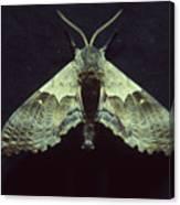 Moth At Texaco Station Canvas Print