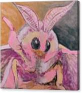 Moth Of Pink Canvas Print