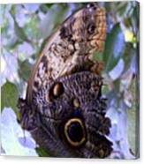 Moth On Blue Flowers Canvas Print