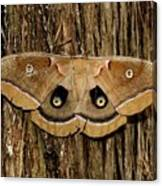 Moth On Cedar Tree Canvas Print