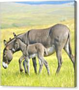 Mother And Baby Burro Canvas Print