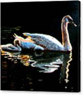Mother and Baby Swan Canvas Print