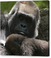 Mother And Child Gorillas1 Canvas Print