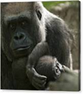 Mother And Child Gorillas4 Canvas Print