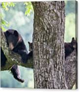 Mother Bear And Cubs Canvas Print